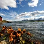 atli börkur seaside eskifjordur iceland